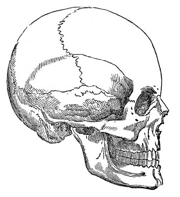 1skull-graphicsfairy005bw